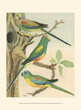 Cassell's Parakeets II Art par  Cassell