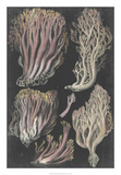 Genus Clavaria II Posters by F. Leuba