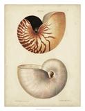 George Wolfgang Knorr - Antique Nautilus I Digitálně vytištěná reprodukce