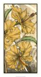 Hibiscus Song II Print by Jennifer Goldberger