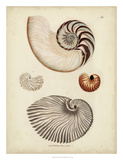 Antique Nautilus II Giclee Print by George Wolfgang Knorr