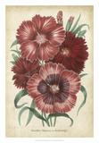 Summer Medley II Giclee Print by G. Severeyns