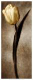 Damask Tulip II Posters by Christine Zalewski