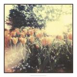 Tulipa Exposta II Giclee-trykk av Jason Johnson