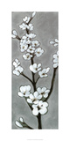White Blossoms I Limited Edition by Jennifer Goldberger