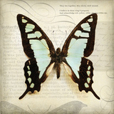 Butterflies Script I Poster by Amy Melious