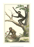 Coaita and Sajou Monkeys Giclee Print by Denis Diderot