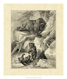 Vintage Common Brown Bear Prints by Friedrich Specht