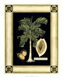 Paradise Palm V Print by Deborah Bookman