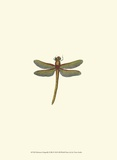 Miniature Dragonfly II Poster by  Vision Studio