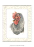 Rooster Insets IV Print by Elissa Della-piana