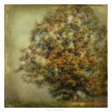 Autumn's Dream Giclee Print by Danny Head
