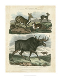 Deer & Moose Posters by Sydenham Teast Edwards