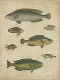 Ichthyology II Print by Abraham Rees