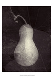 Gourd I Poster by Elena Ray