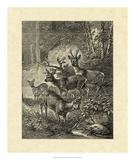 Vintage Roe Deer I Giclee Print by Friedrich Specht