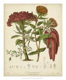 Twining Botanicals II Giclee Print by Elizabeth Twining
