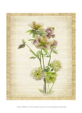 Linen Wildflowers VII Art by Harold Davis