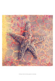 Seashell-Starfish Prints by Elena Ray