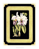 Orchids on Black II Giclee Print by J. Nugent Fitch