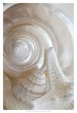Pearlesce III Prints by Christine Zalewski