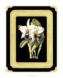 Orchids on Black I Giclee Print by J. Nugent Fitch