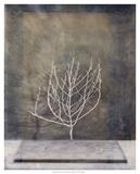 Desert Form II Prints by Elena Ray