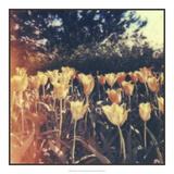 Tulipa Exposta III Giclee-trykk av Jason Johnson