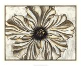 Fresco Flowerhead I Giclee Print by Nancy Slocum