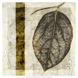 Fall Leaves I Prints by Christine Zalewski
