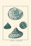 Shells in Aqua IV Art by Vision Studio
