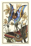 Butterfly I Giclee Print by  Vision Studio