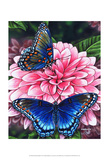Red Spotted Purple Prints by Marilyn Barkhouse