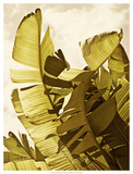 Palm Fronds II Poster by Rachel Perry