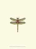 Miniature Dragonfly IV Prints by Vision Studio