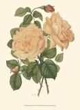 Vintage Roses III Posters by  Vision Studio