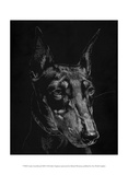 Canine Scratchboard XIII Prints by Julie Chapman