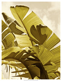 Palm Fronds I Prints by Rachel Perry