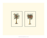 Miniature Palm II Affiches