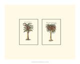 Miniature Palm II Giclée-tryk af  Vision Studio