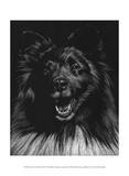 Canine Scratchboard IX Art by Julie Chapman