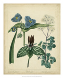 Cottage Florals V Print by Sydenham Teast Edwards