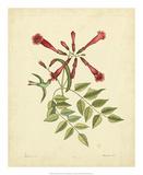 Catesby Bird & Botanical VI Print by Mark Catesby