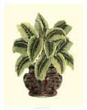 Lush Foliage in Urn I Giclee Print