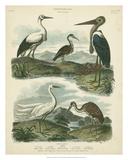 Heron & Crane Species I Reproduction procédé giclée par Sydenham Teast Edwards