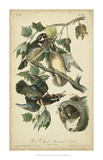 Audubon Wood Duck Giclee Print by John James Audubon