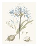 Bashful Blue Florals II Giclee Print by John Miller