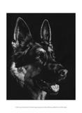 Canine Scratchboard I Prints by Julie Chapman
