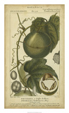 Exotic Botanica I Giclee Print by  Turpin
