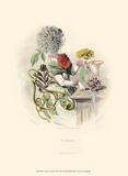 Le Fleur Animé VII Prints by J.J. Grandville